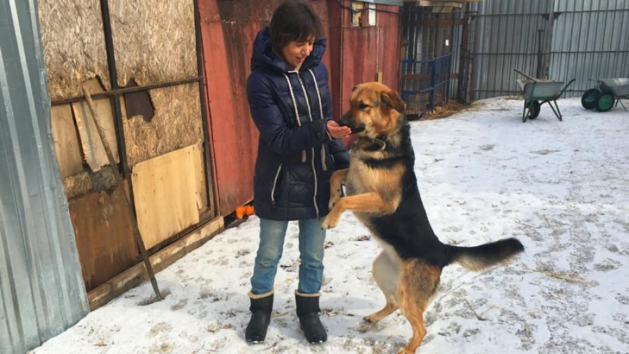 Депутаты Заксобрания Калужской области дорабатывают закон об ответственности хозяев за домашних питомцев