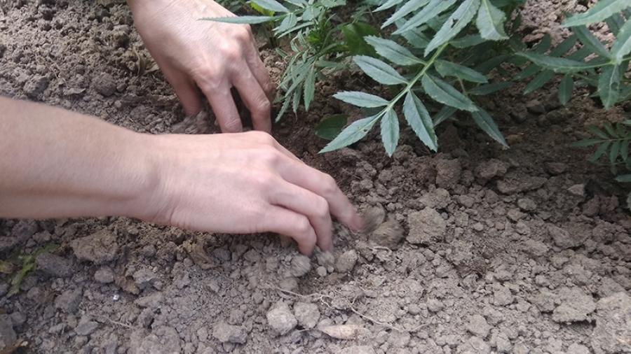 Молодых жителей Обнинска судят по обвинению в торговле наркотиками
