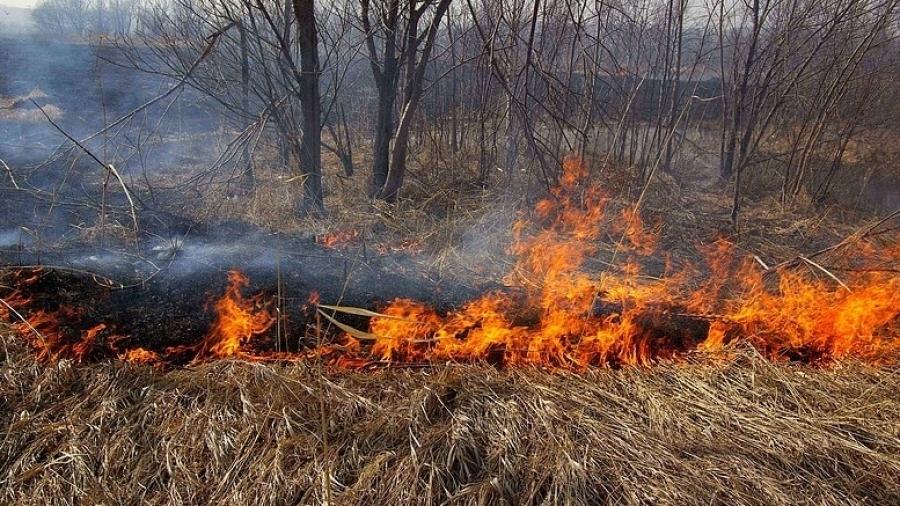 В Калужской области с начала пожароопасного сезона пожарные потушили около 600 га травы