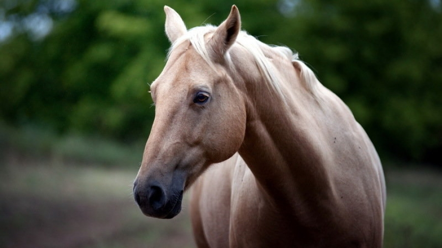 Обнинцев приглашают на фестиваль «Волшебный мир лошади»