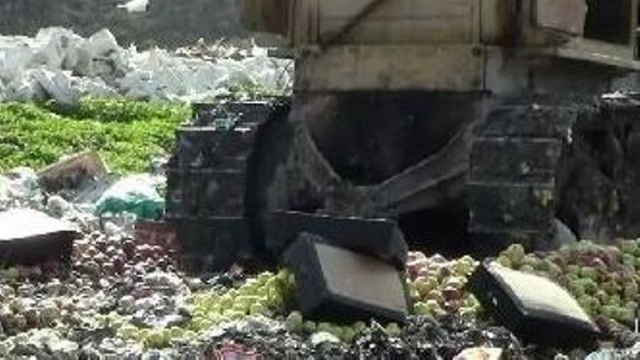 В Калужской области уничтожили 13,78 тонн яблок