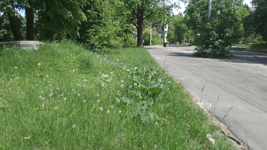 За нескошенную траву в Обнинске будут штрафовать