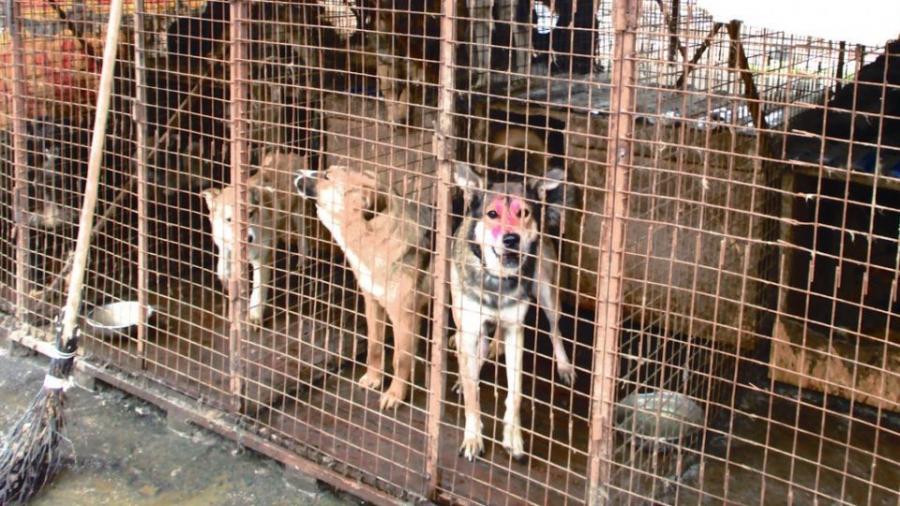 Для цивилизованного решения вопроса с бездомными животными Обнинску нужно три миллиона