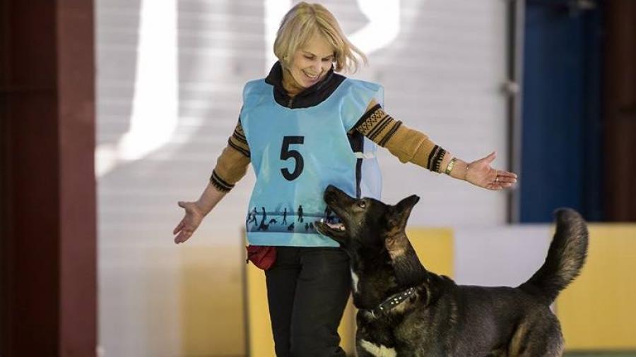 В Обнинске за год 103 собаки из «Нового ковчега» обрели хозяев