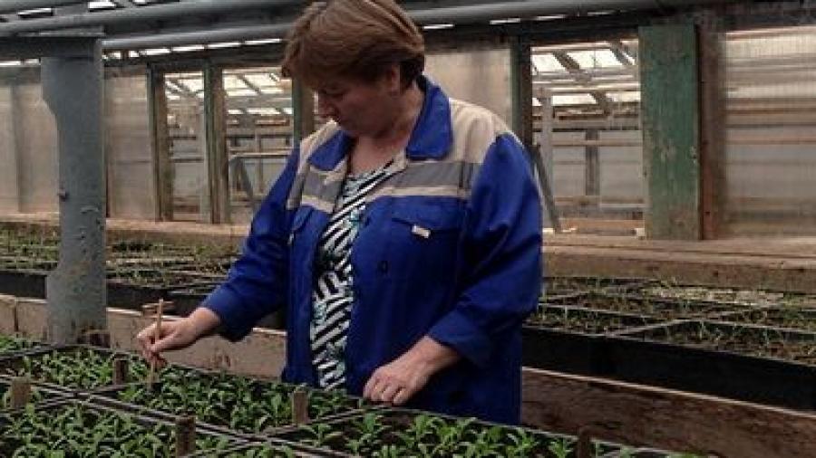 Зеленое хозяйство Обнинска готовится к весенним посадкам