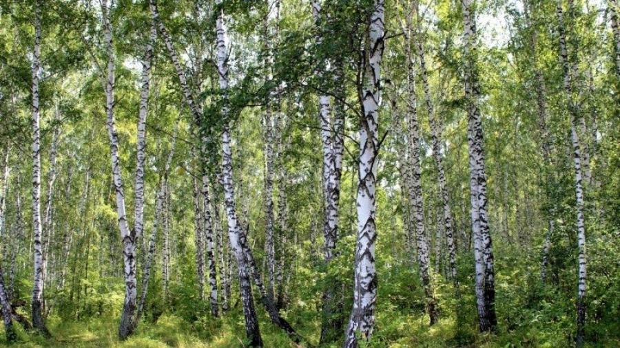 С начала года в Калужской области обнаружили 37 незаконных вырубок леса