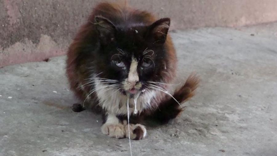 Жительницу Обнинска покусал заразившийся бешенством домашний кот