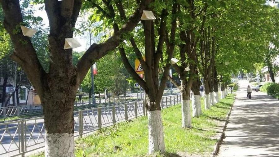 В Обнинске на каштанах по ул.Курчатова появились ловушки против вредителей
