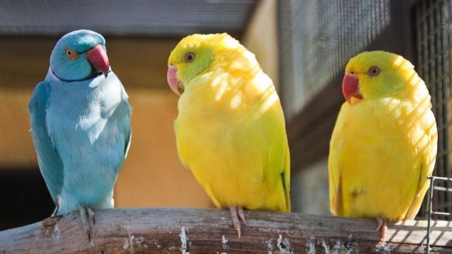 В парк птиц «Воробьи» прибыли новые обитатели