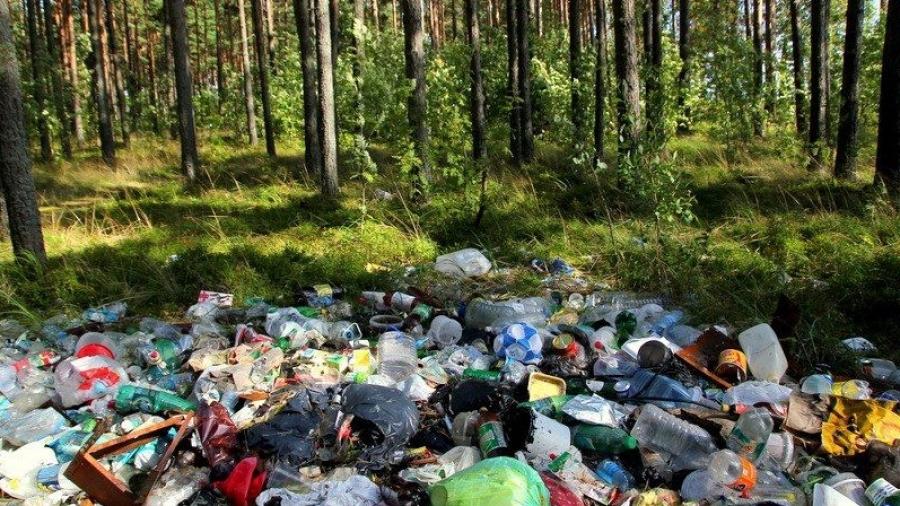 В Калужской области остро стоит проблема несанкционированных свалок в лесах