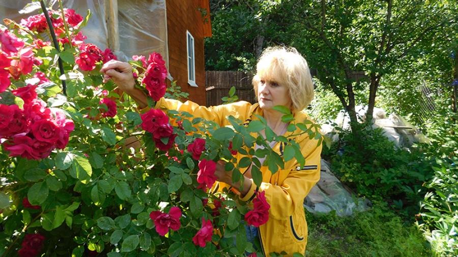 В зоне особого назначения: 200 садовых участков рядом с Обнинском включили в охраняемую территорию