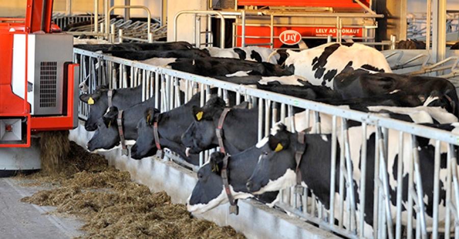 У жителей Обнинска примут жалобы на некачественные молочные продукты