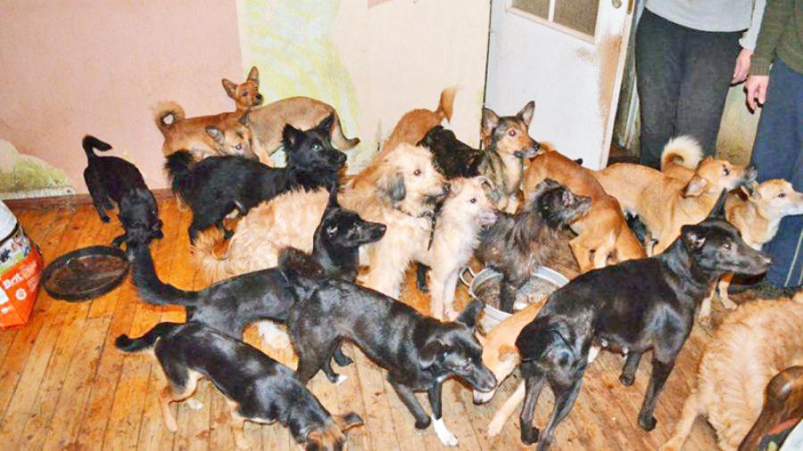 Инициатива губернатора законодательно ограничить количество домашних животных вызвала огромный общественный резонанс