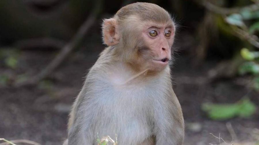 Из калужского зоозащитного центра украли обезьян