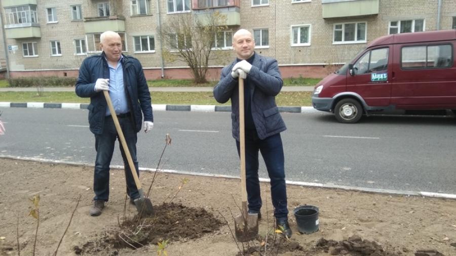 На ул. Жукова в Обнинске высадили больше 40 кустов древовидной гортензии