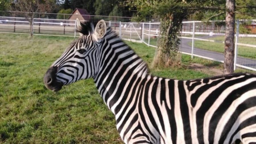В Парке птиц появилась зебра