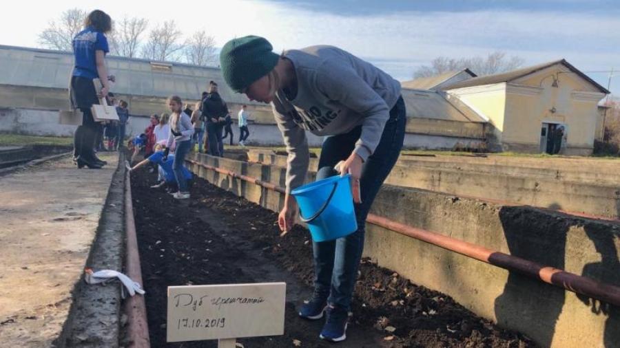 Обнинские школьники хотят возродить калужские леса: в оранжерее ГНЦ РФ ФЭИ они посадили несколько сотен молодых дубов, клен и липу