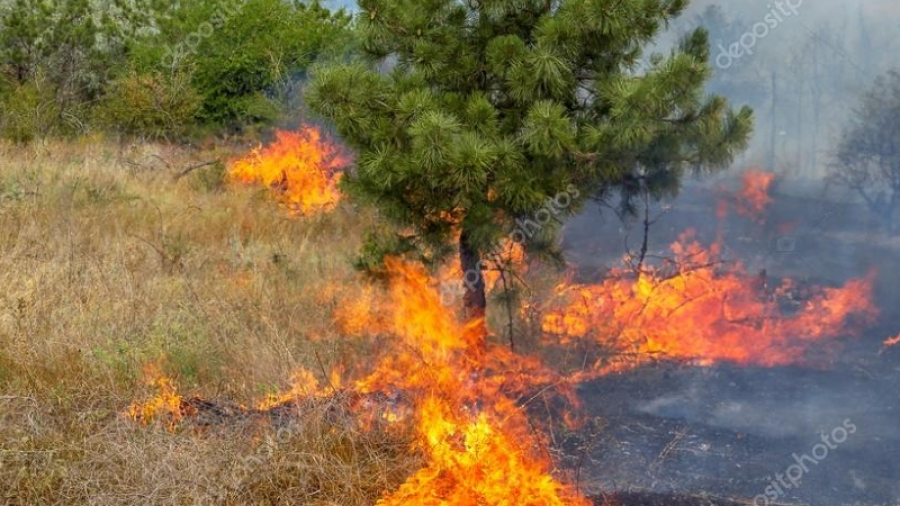 В Калужской области действует инновационная система обнаружения лесных пожаров