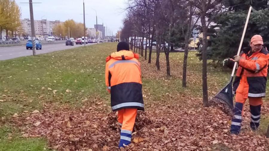 Когда с обнинских улиц уберут собранную листву?