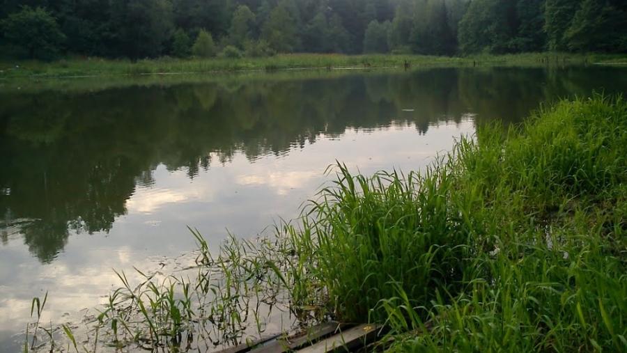 Специалисты проверили воду в реке Страдаловка