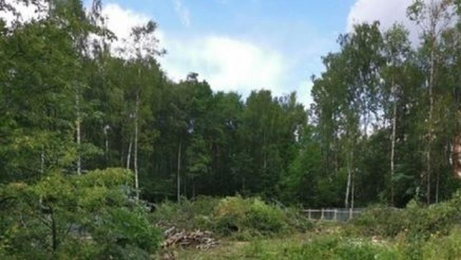 Начало строительства нового здания прокуратуры вызвало бурную реакцию, ведь под него вырубают лес