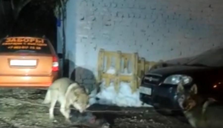 Калужане взбударажены - по улицам города, по сообщениям СМИ, бегают волки