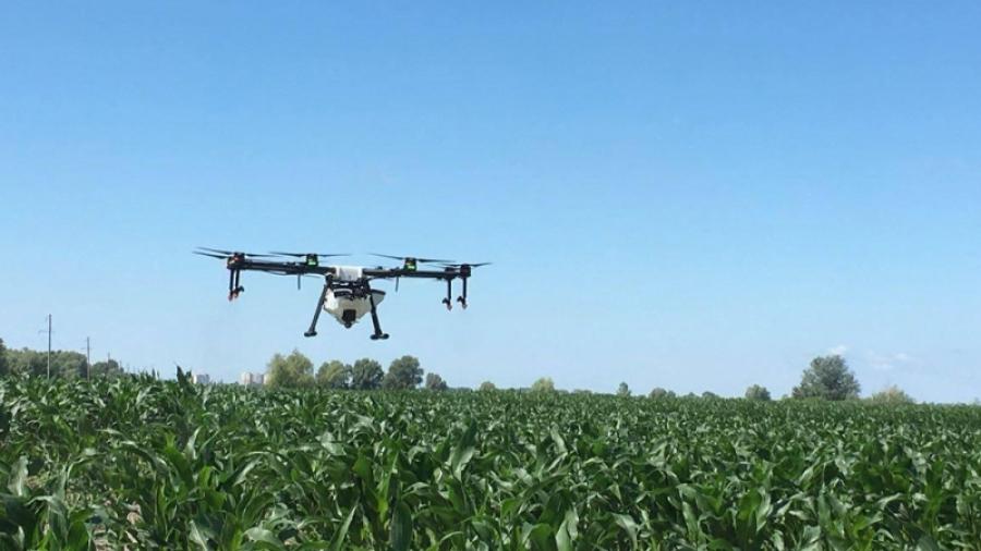 С борщевиком с Калужской области хотят бороться с помощью дронов