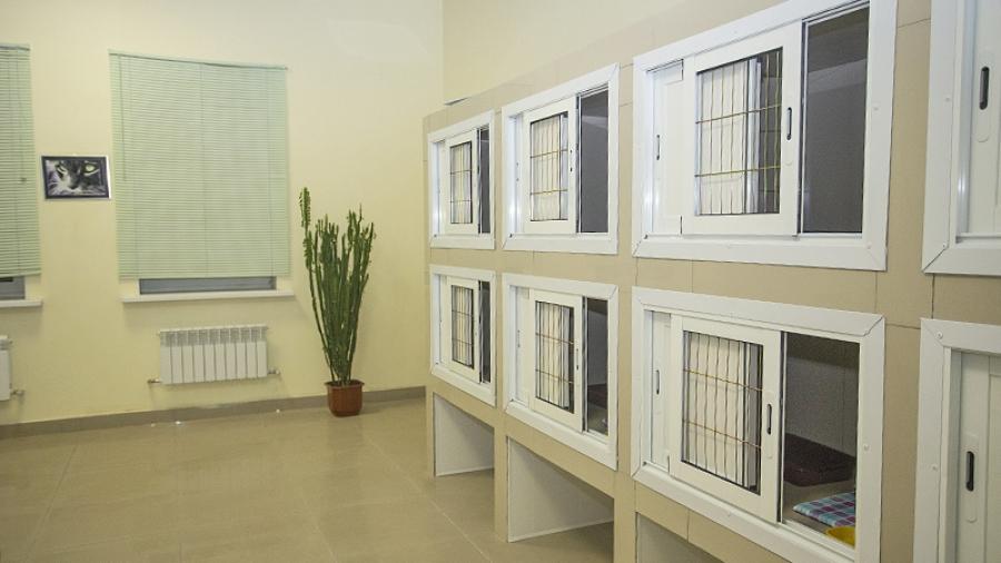 Накануне Нового года в ветклинике «Добровет» открылась первая в Обнинске гостиница для домашних животных