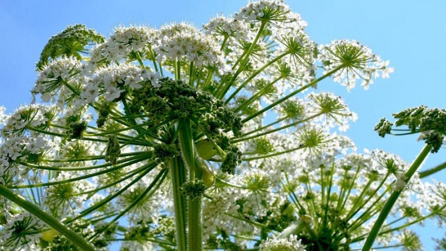 В Калужской области издадут «Черную книгу растений»