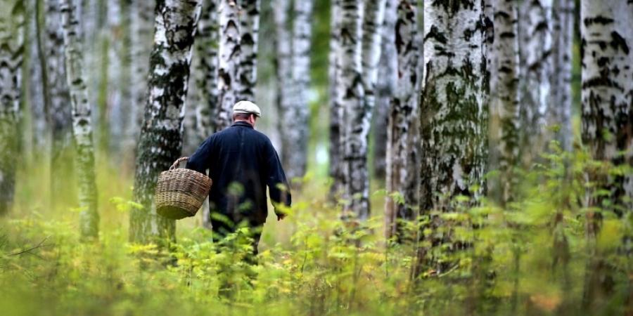За выходные в лесах Калужской области заблудились 10 человек