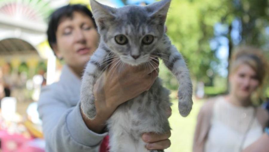 В Обнинске в подвале замуровали кошек