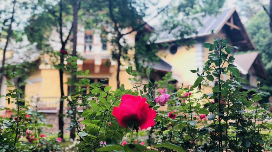 На этой неделе сотрудники музея рассмотрят проект нового цветника на Морозовской даче