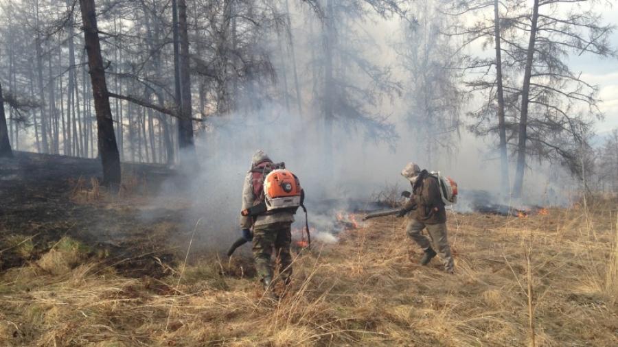 С начала года в Калужской области произошло 80 лесных пожаров