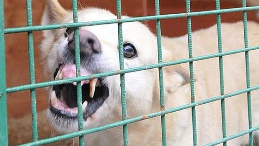 С 1 марта в Калужской области изменились правила содержания домашних животных