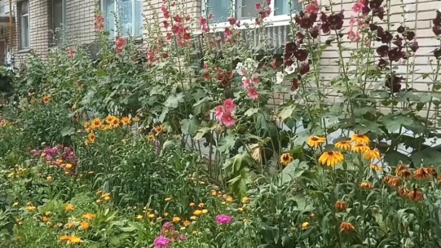 Победителей обнинского конкурса «Цветущий двор» наградят 24 июля