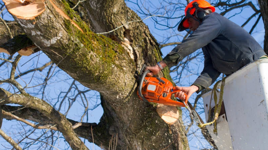 Чтобы отремонтировать дворы, в Обнинске спилят деревья