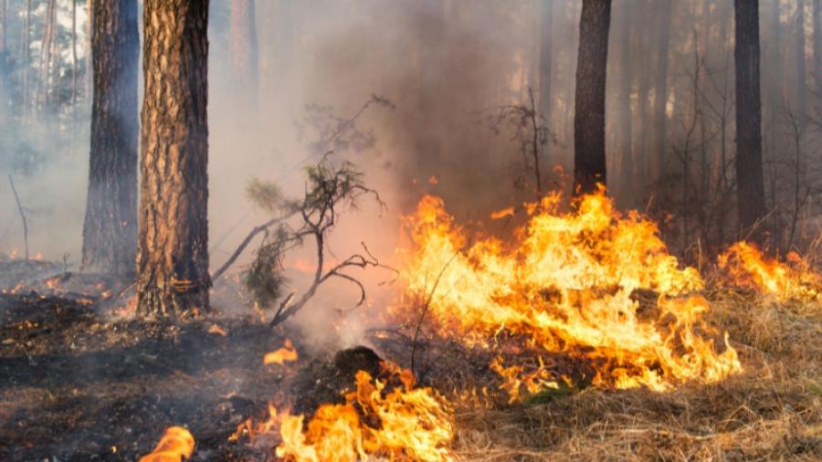 В Калужской области подошел к концу пожароопасный сезон