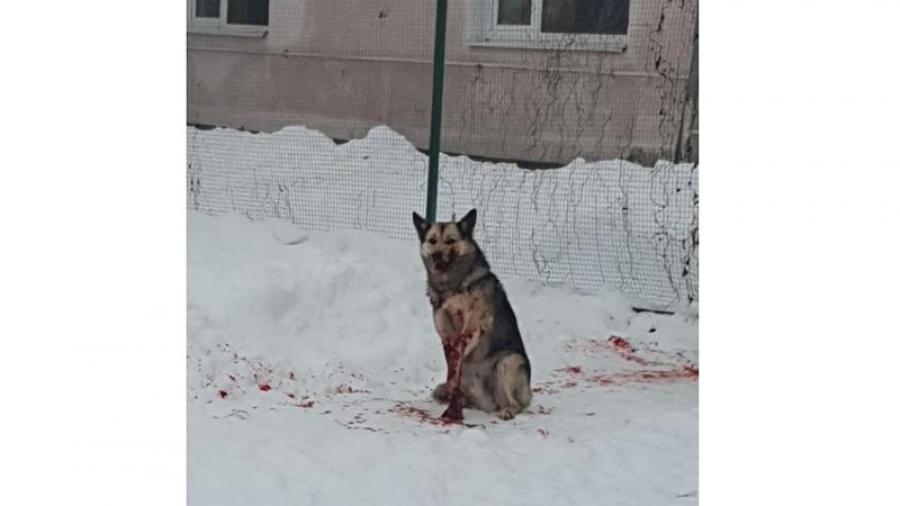 С начала года Калужскую область захлестнул вал дичайших преступлений по отношению к животным