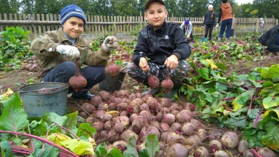 Ученики первой школы Обнинска выставят выращенные овощи на сельхозярмарке