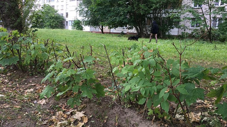 Жители Обнинска недовольны уходом за зелеными насаждениями в городе