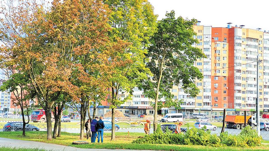 Жители Маркса, 76 возмущены вырубкой деревьев коммунальными службами