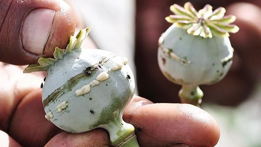 Житель соседнего с Обнинском Малоярославца может сесть на 2 года за выращивание мака