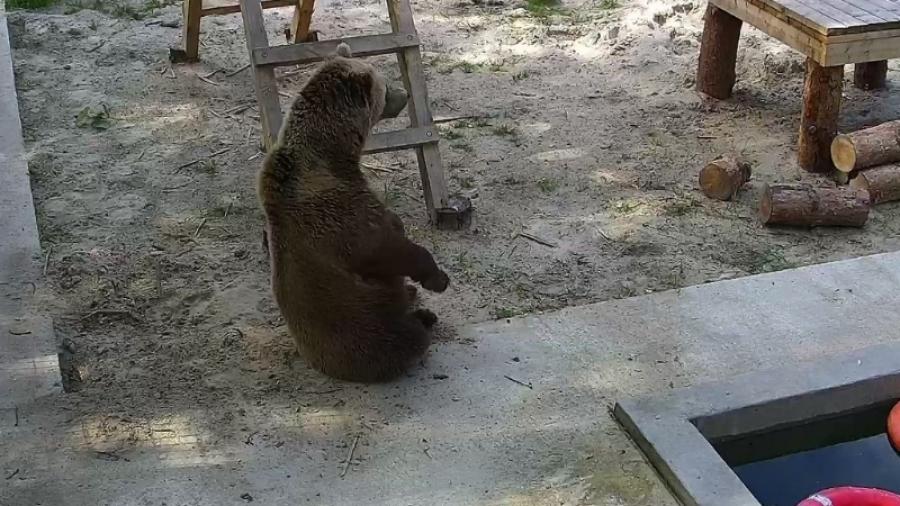 Калужскому «аэродромному медведю» плюнули в морду