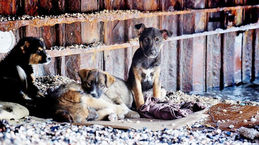 Отлов животных — вторая по популярности проблема у жителей Калужской области, сразу после уборки снега