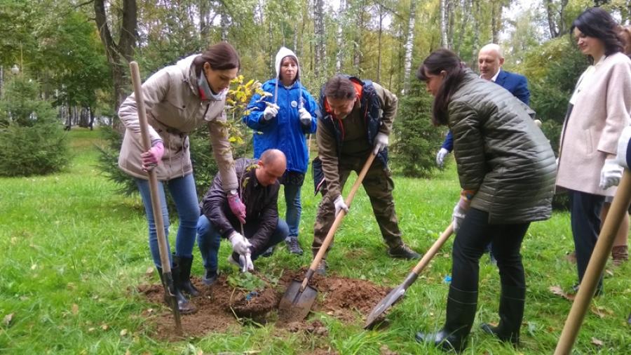 В Обнинске у мемориала «Вечный огонь» высадили молодые дубы