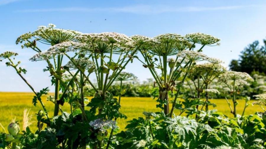 В Калужской области представили Черную книгу растений