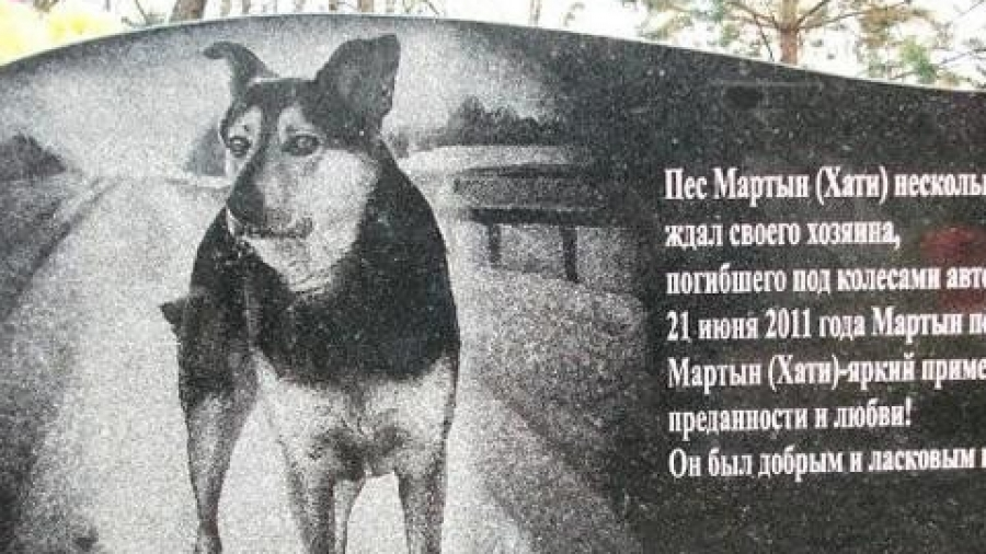 В Калужской области поставили памятник «русскому Хатико»