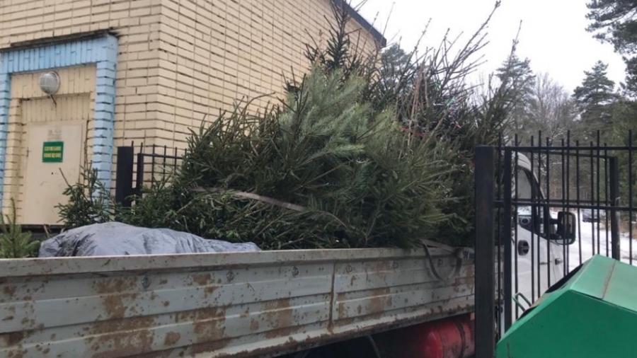 В Обнинске сдали порядка полусотни елок. Сегодня их увезут на утилизацию