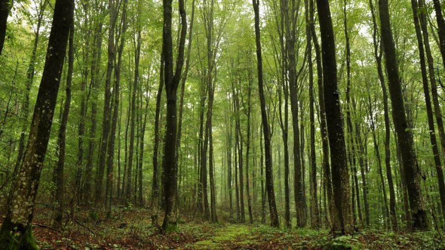 В Боровском районе нашли заблудившегося в лесу пожилого мужчину с помощью вертолета