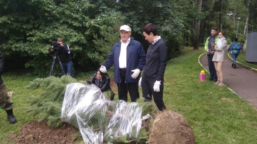 В Городском парке посадили пять новых сосен